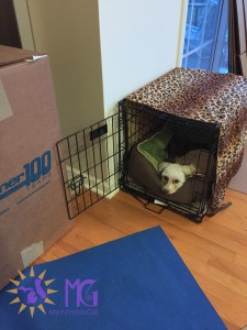 small white dog in crate