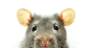 Rodents and Spiders and Pests, Oh My!