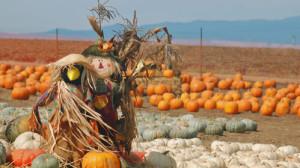Pumpkin Patch Redux