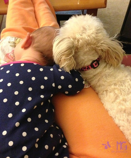 baby and puppy resting on mama's lap diary of a dog