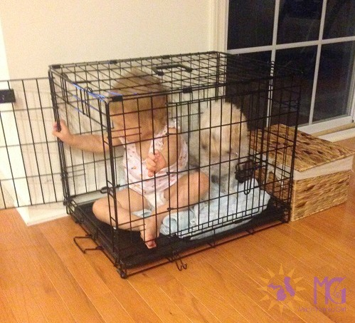 toddler and puppy in crate diary of a dog