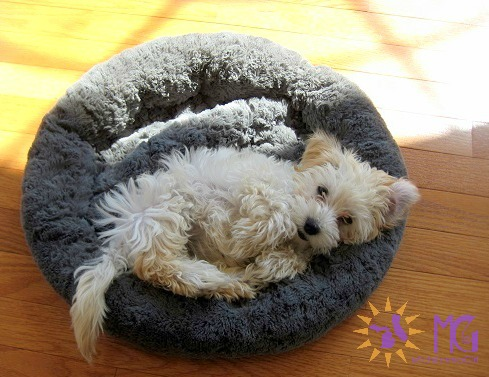 puppy on round fluffy bed diary of a dog