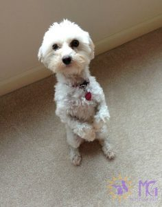 diary of a dog sitting on hind legs