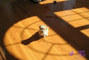 puppy on hardwood floor in sunshine diary of a dog