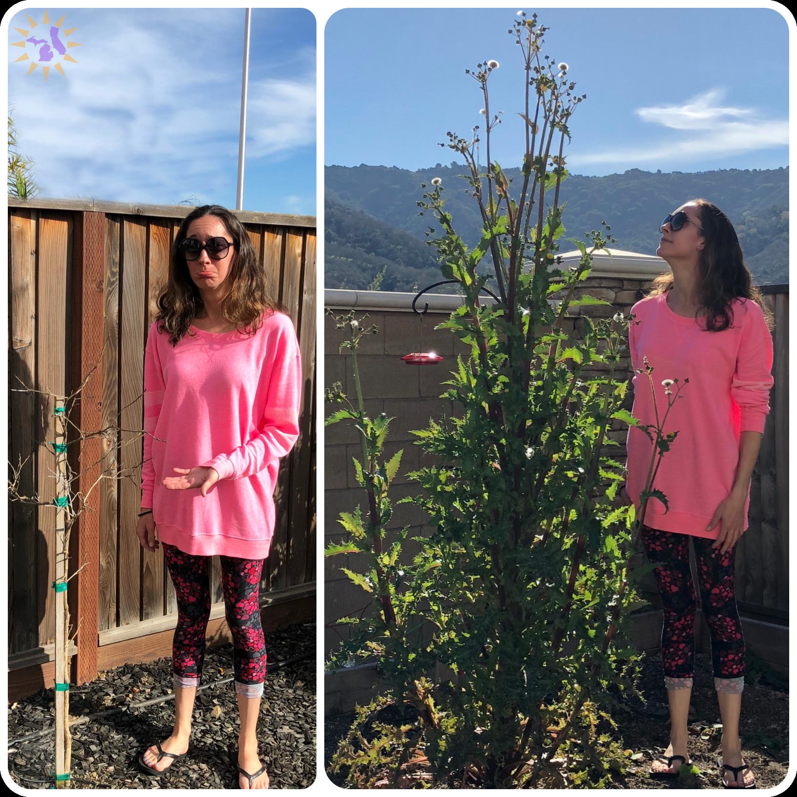 tall weed